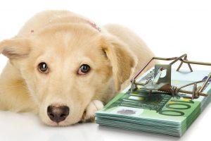 """Šuns """"dovana"""" – 200 eurų"""