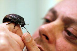 Gal Šv. Valentino dienai norėtumėte tarakono?
