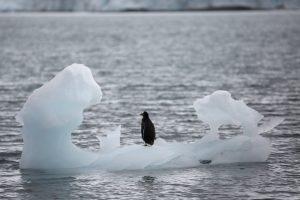 Trigubai paspartėjęs Antarkties ledynų tirpsmas kelia vandenynų lygį