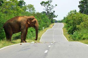 Iš zoologijos sodo ištrūko dramblys