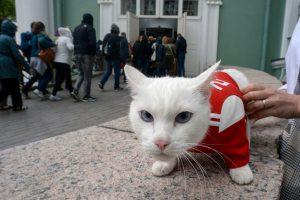 Kurčias katinas Achilas – oficialusis Pasaulio futbolo čempionato pranašautojas