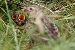 S. Paltanavičius: grožimės paukščiais, nors turėtume pasitraukti
