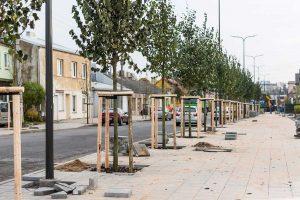 Nauji medžiai papuošė dar vieną Kauno gatvę