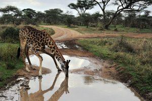 Didžiausio Afrikos ežero gyvūnijai ir augalijai gresia išnykimas
