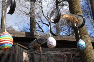 Velykinė nuotaika neaplenkė zoologijos sodo gyvūnų