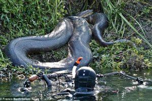 JAV gamtininkas nedrįso pasiduoti anakondos nasrams