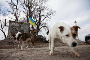 Mariupolio srityje gyvenantys ukrainiečiai nusivylę viskuo