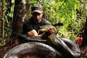 Daugiau detalių: kaip ir kodėl anakonda prarijo vyrą?
