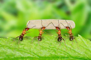 Ką daryti, jei kieme ima karaliauti skruzdėlės?