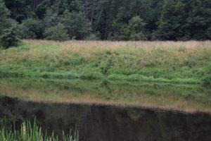 Pažeidėjams į Lietuvą patekti nesutrukdė net pakilęs Šešupės vanduo