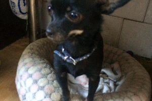 Kaunietė ieško dingusio senelių šuniuko: už naudingą informaciją žada atlygį