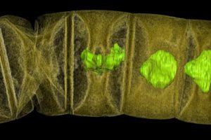 Indijoje rasta galimai seniausių pasaulyje augalų fosilijų
