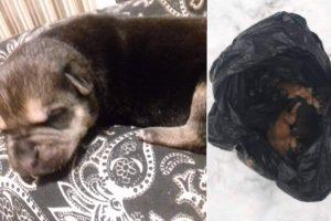 Trūksta žodžių: šiukšlių maiše palikti devyni šuniukai, gyvas liko tik vienas