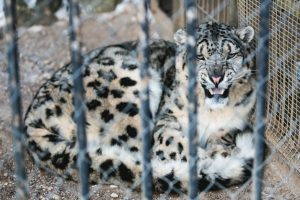 Seime iškilo klausimas, ar apskritai reikalingas Lietuvos zoologijos sodas