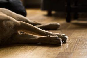 Alytiškis per balkoną išmetė kaimynės šunį – gyvūną teko užmigdyti