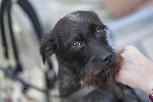 Kupiškyje šiukšlių krūvoje rastas užmuštas šuo