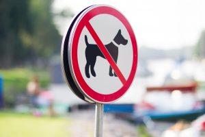 Automobilis partrenkė šuns į gatvę ištemptą vilnietį