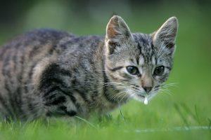 Kad nuodija kates, pasigyrė feisbuke