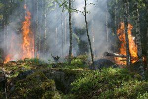 Pakaunės miškus gelbėjo vasarinės liūtys
