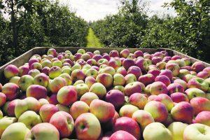 Kokybės ženklas ūkininkų produkcijai atveria daugiau galimybių