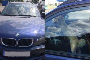 Kilo sujudimas: Aleksote automobilyje paliktas šuo