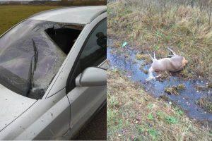 """""""Opel"""" kelionę sudrumstė kelyje pasimaišę penki elniai"""