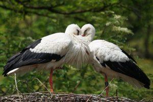 Naujovė gamtoje – paukštis su išmaniuoju prietaisu