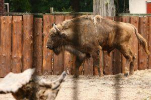 Zoologijos sodo rekonstrukcija: bus ruošiamos naujos darbų pirkimo sąlygos