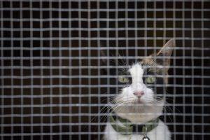 Niujorke benamės katės pasitelktos karui su žiurkėmis