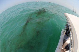 Kuveitas pranešė apie antrą naftos išsiliejimą