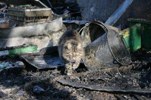 Prieš katinus – smurto protrūkis