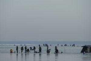 Kuršių marių ledas tampa nesaugus