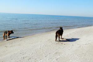 Į paplūdimį – su augintiniais
