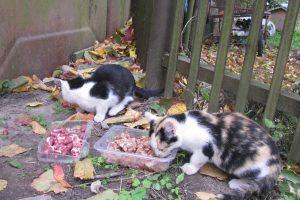 Kova prieš gyvūnų nuodijimą