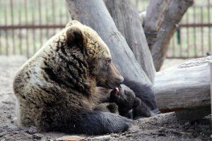 Zoologijos sode – nauji gyventojai