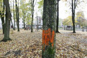 Gyventojams užkliuvo neiškirsti medžiai