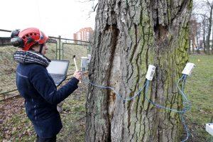 Arboristų išvados dar negavo