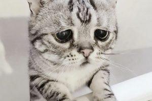 Katė liūdnomis akimis