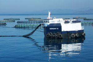 Statys didžiausią pasaulyje žuvų veisyklą