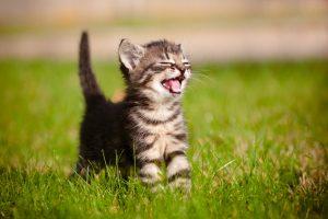 Iš šulinio ištraukė kačiuką