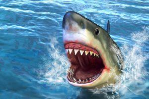 Kubos pakrantėje ryklys sudraskė jauną vyrą
