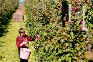 Sodininkystės nauda sveikatai: net patys nemaloniausi darbai taps malonūs
