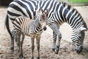 Į zoologijos sodą – neišėjus iš namų