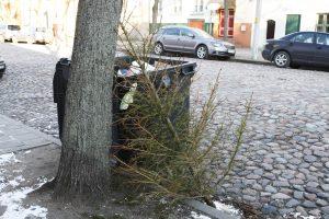 Kur Kaune palikti kalėdines eglutes? (vietų sąrašas)