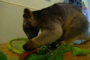 Viešbučio svečiai gali išgerti kavos su kengūra