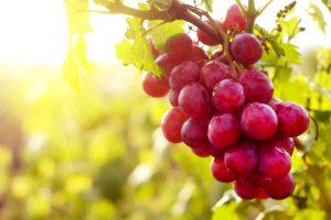 Nemokami vaisiai ir pienas vaikams – nuo spalio