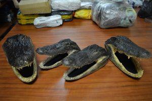 Muitininkų laimikiai: baltarusiška kokakola, gyvatės, skorpionai ir aligatorių galvos