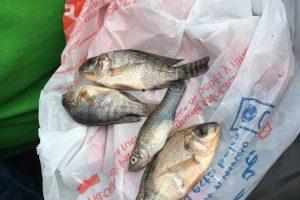 Debesuota, gali lyti žuvimi?