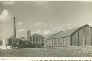 Marijampolės cukraus fabrikui grąžinamas istorinis pavadinimas