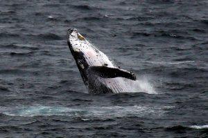 Po banginio smūgio žvejybos laivas pakilo į orą